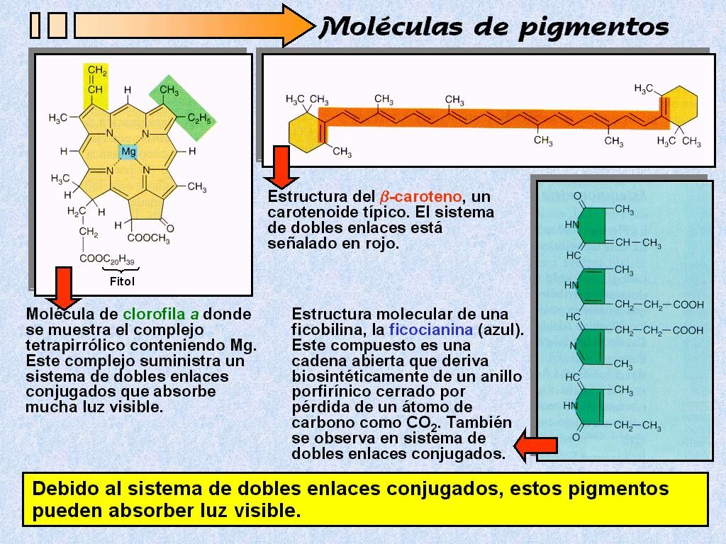 Figura 1111 Principales tipos de pigmentos fotosintéticos
