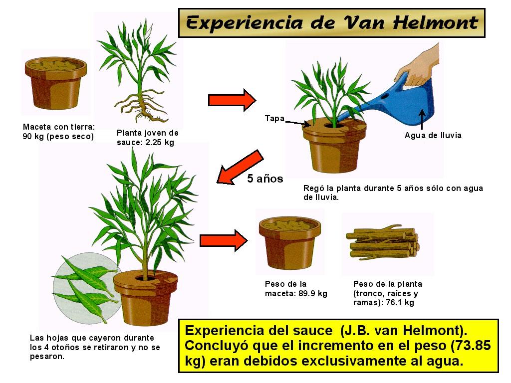Jan Ingenhousz Photosynthesis Experiment >> Jean-baptiste Van Helmont Experiment Related Keywords - Jean-baptiste Van Helmont Experiment ...
